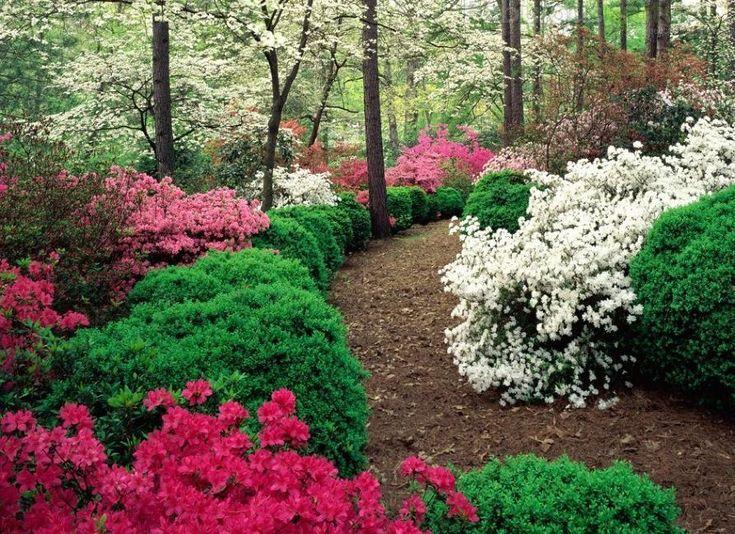 Azaleas, Dogwood and Boxwood: Boxwood Gardens, Care Tips, Gardens Walkways, Woodland Gardens, Gardens Paths, Gardens Landscape, Fairyt Forests, Flower Gardens, Beautiful Gardens