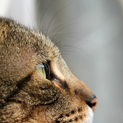 my cat Mick. taken by me with my canon 60D