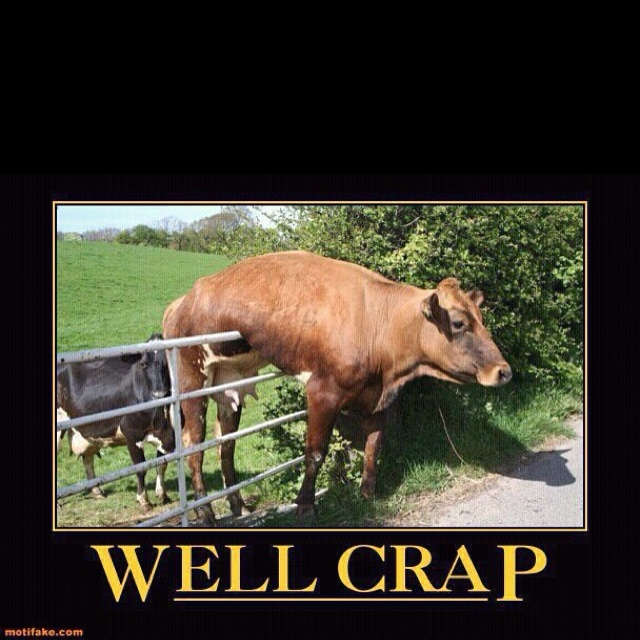 Sitting here all by myself laughing uncontrollably at this one...Cows. Are. Not. Smart.