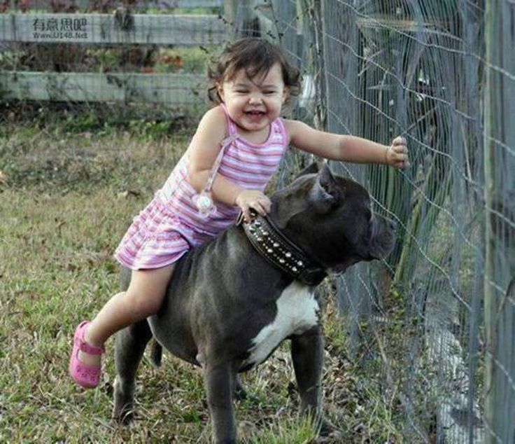 babysit a dog koni polycode co