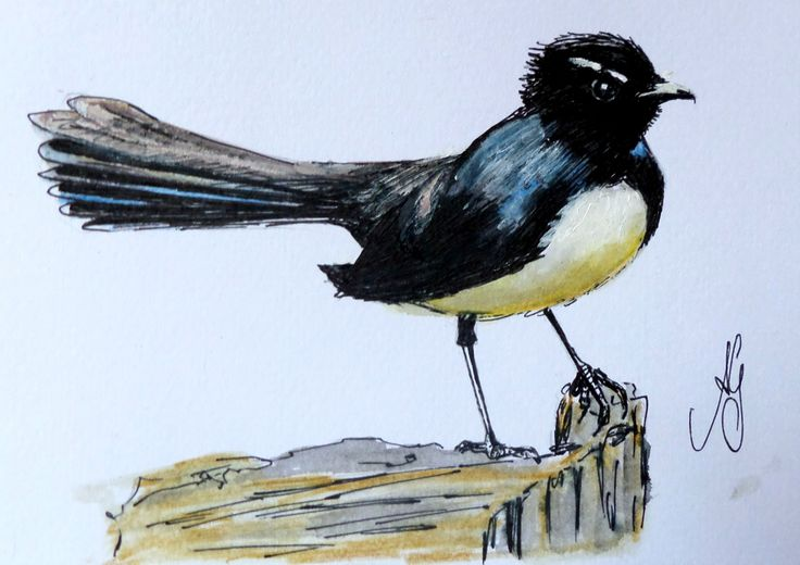 Willy Wagtail -Watercolour and ink - 16cm x 12cm - $40.00