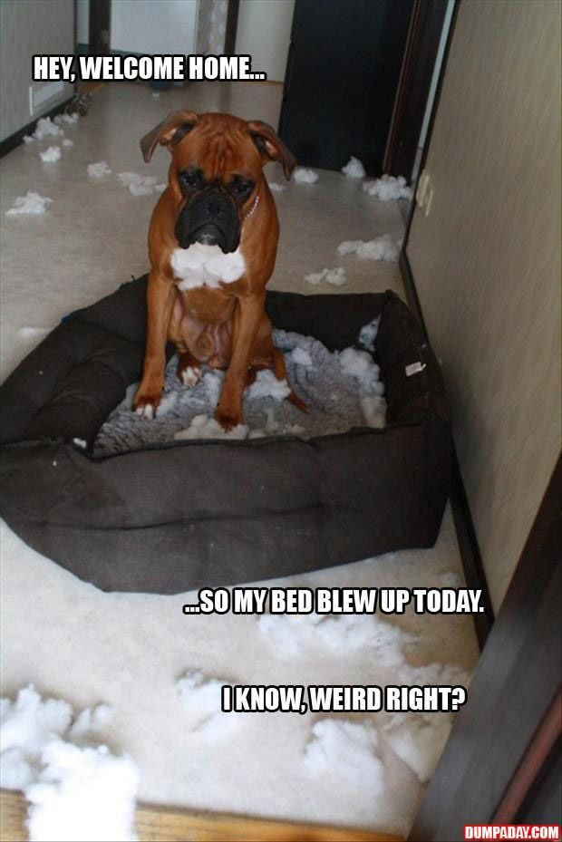 dog's bed blew up funny pictures...I love these