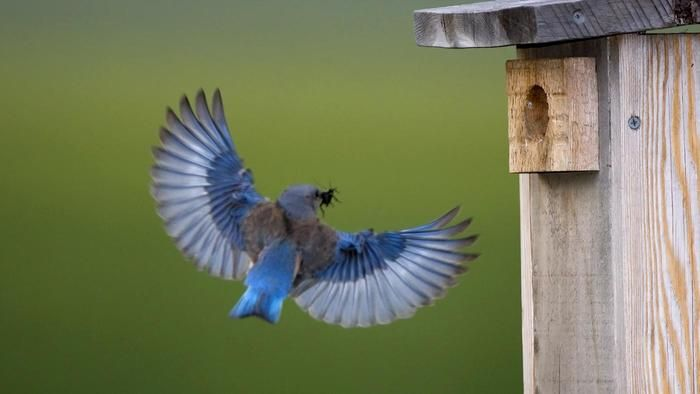 148 Best Birds Feathered Friends Images On Pinterest Animal Pics
