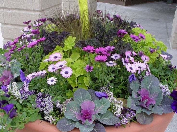 Container garden ideas flowers photograph container ideas - Flowers for container gardening ...