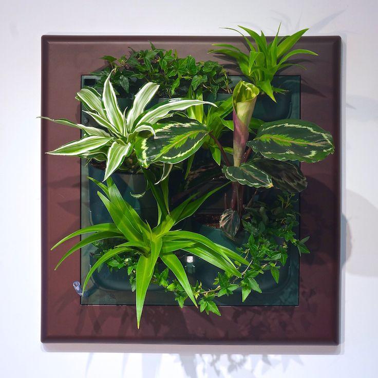 Фитокартина Flowall | Фитостены #interiordesign #office #administration #entrancehall #lounge #lobby #modern #wall #artdeco #Green #Wall #Verticalgarden #фитостены #фитокартина