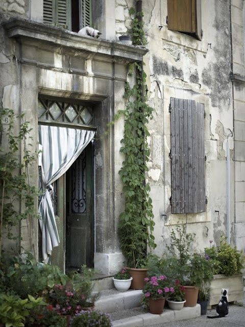 .: Doors, Old House, French Cat, Simple Everyday, Gardens, Old World Charms, Curb Appeal, Kitty, Entrance