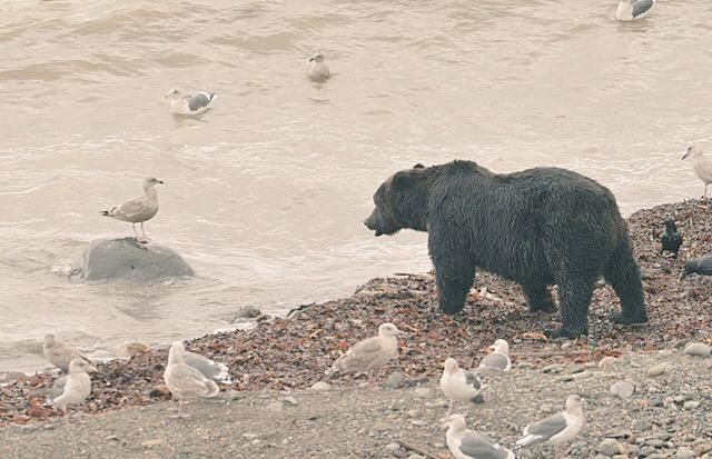 カモメと会話するクマ。Hokkaido