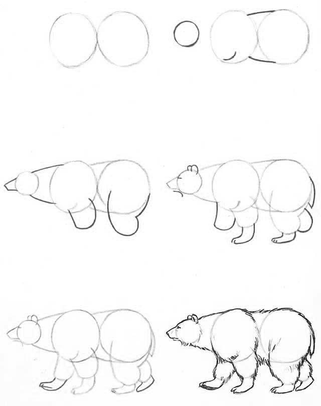 Manera de dibujar un oso.