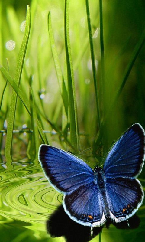 93 Butterfly Wallpaper For Mobile Phone Hd Butterfly Wallpaper For