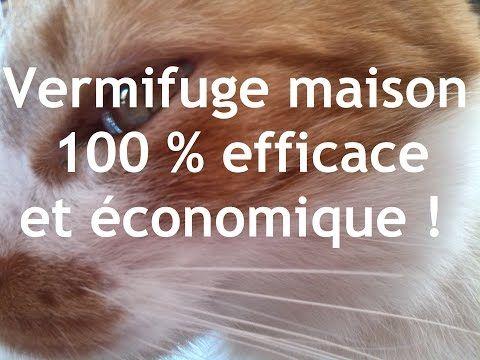 Vermifuge pour chat 100 % naturel (vermifuge maison simple et efficace) - YouTube