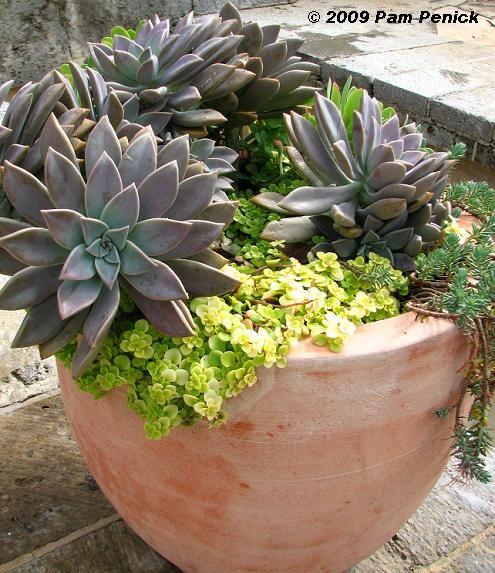 San Antonio garden tour pic by Pam Pennick - nice succulent pot