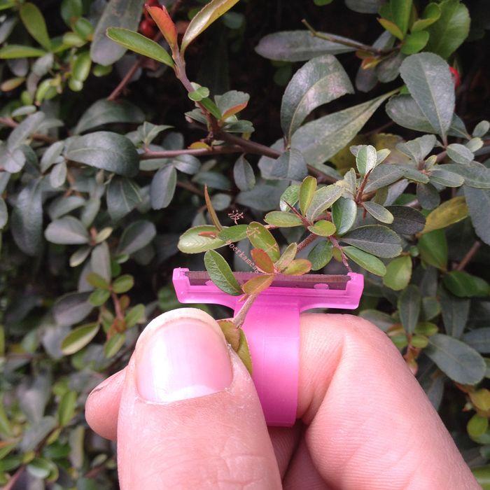 T типа или V типа томатного сбор фруктов сбор фруктов или профессиональный сбор фруктов сбор нож кольцо кольцо