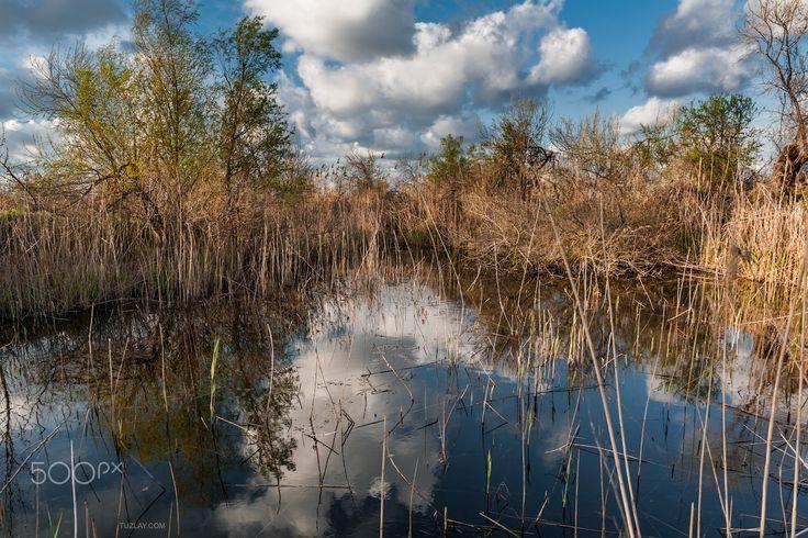 Clouds in the reeds - Small pond somewhere on the Taman peninsula. Temryuk district, Krasnodar Krai, Russia.