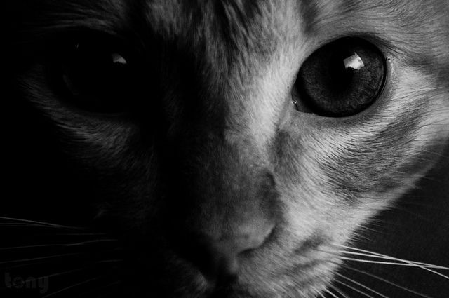 17 Best images about eyes up close on Pinterest | Eye ...