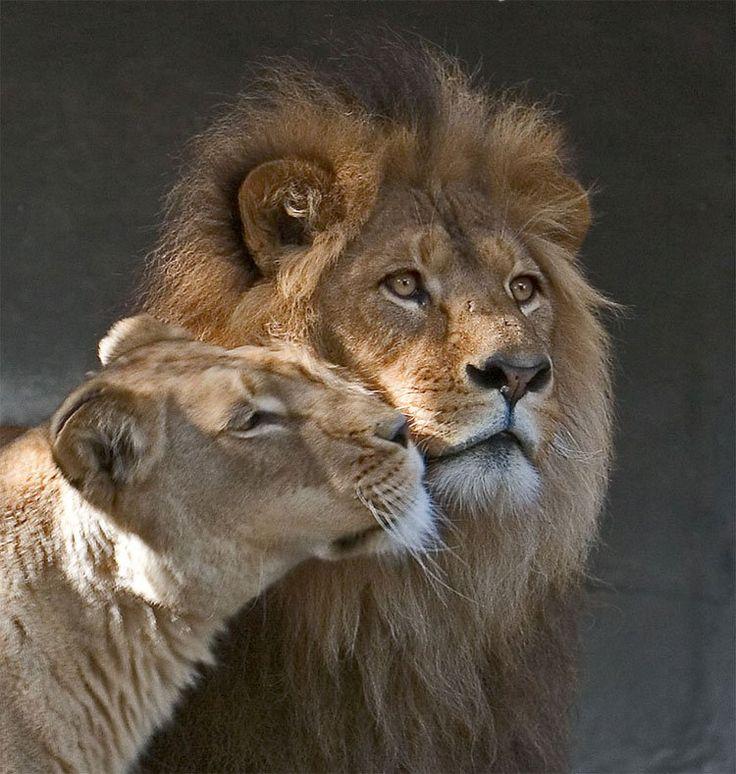Картинки о влюбленных животных