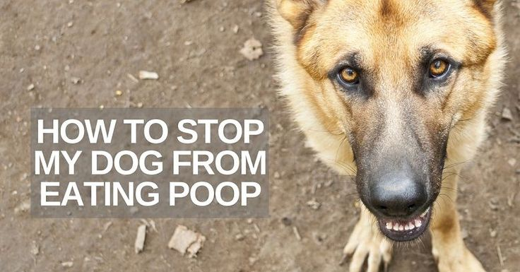 how to stop your dog from eating its poop