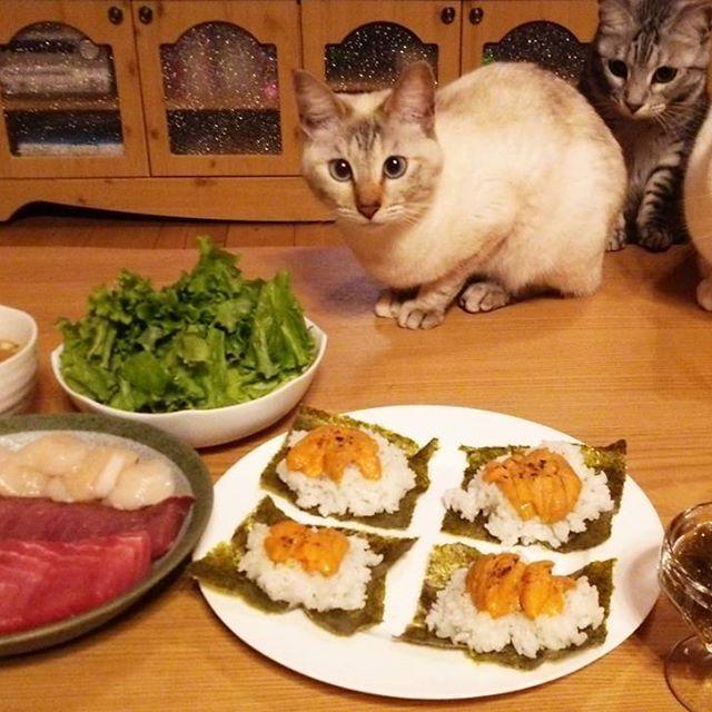 #焼きウニ♡  週末の夕飯は毎度#お刺身♡  #おうちごはん  #にゃんこ三兄弟 #猫 #ねこ #愛猫 #白猫 #シャムミックス #シャムトラ #サバトラ #ニャンコ #にゃんこ #ねこ部 #仲良し #いつも一緒 #cat #lovecats #catlove #catstagram #kitty #whitecat #kawaii #ねこすたぐらむ #にゃんすたぐらむ #猫ばか #元野良猫 #猫中心 #猫好き #みんねこ