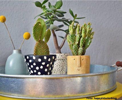 ber ideen zu kakteen und sukkulenten auf pinterest. Black Bedroom Furniture Sets. Home Design Ideas