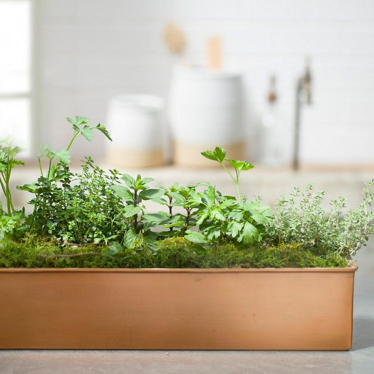 Current Obsessions Going North Herb Garden Herb Garden 400 x 300