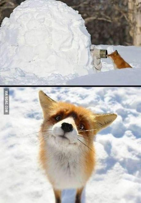"""""""Hello, this is fox""""."""