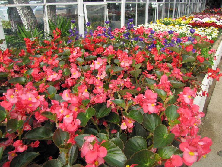 Gran variedad de #flores. Si eres un amante de la #jardinería encontrarás lo que buscas. www.viverosirun.es