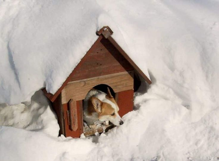Why is dog house important for your dog?Where to put your dog house?DIY cold weather dog house?How to build a dog heater out of a paint can?Tutorials how to build insulated dog houses for winter.