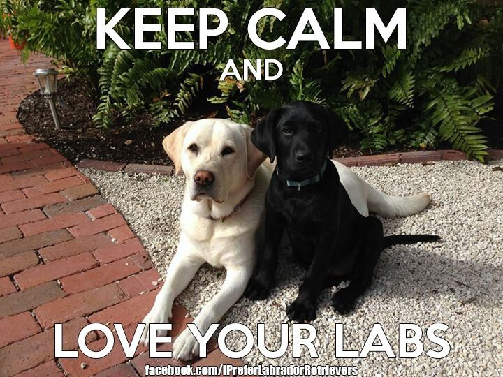 Keep Calm And Love Black Labs 95 best images about L...