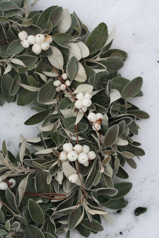 Saídos da Concha: Winter :: White January
