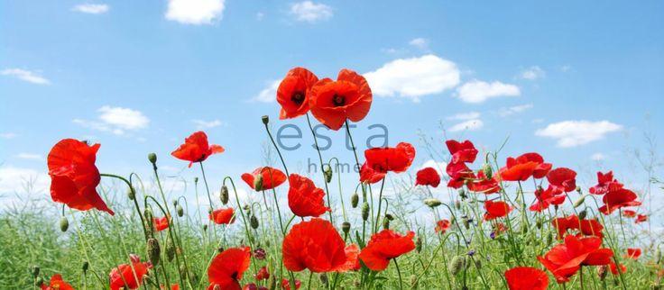 PhotowallXL - Field of poppies | Suomen AM-Markkinointi Oy