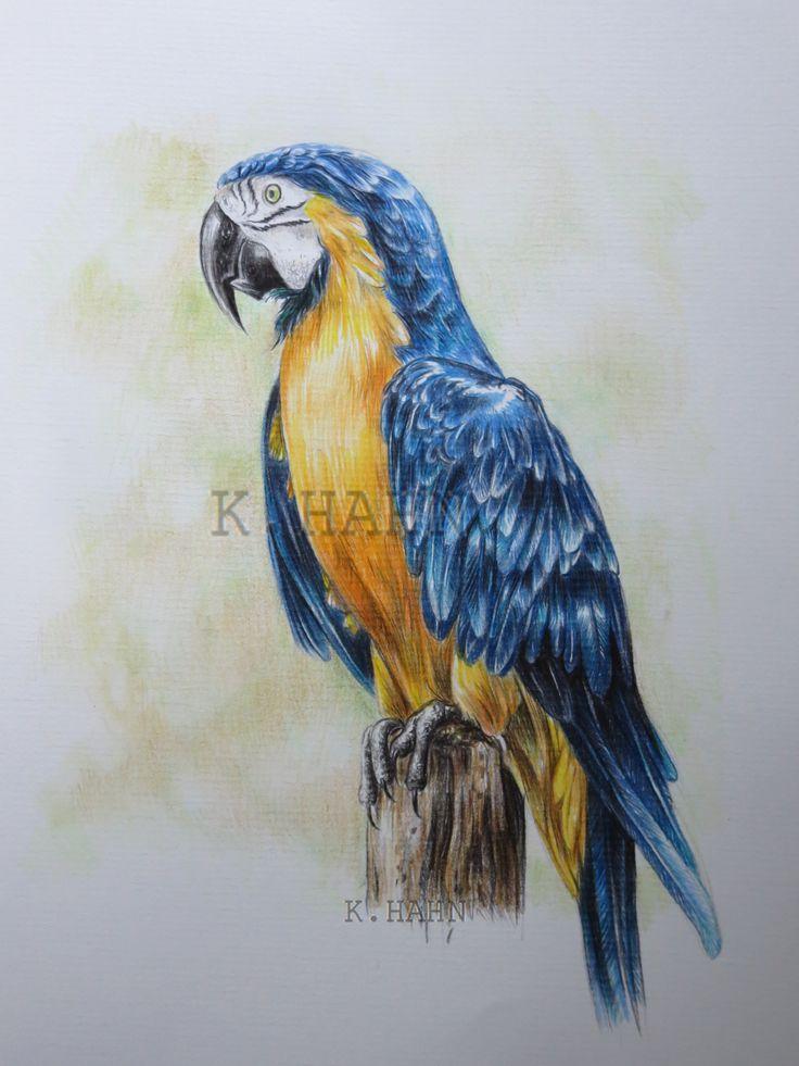 Papagei, Faber Castell Polychromos, Skizzenbuch