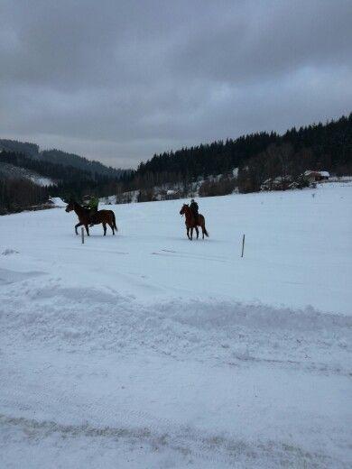 V zime na koňoch 🏇