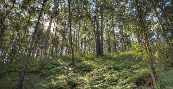 Top Ten Places To Go Hiking In Moreton Bay Region