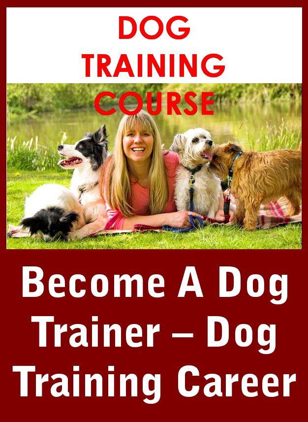 Dog Training Become A Dog Trainer Dog Training Career In 2020 Become A Dog Trainer Dog Trainer Dog Training