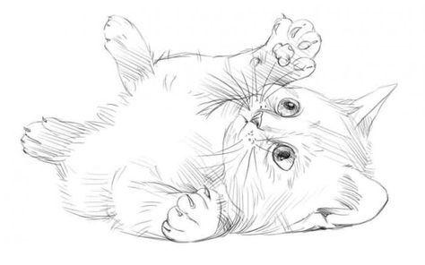 Поэтапное рисование карандашом. Котик / Уроки рисования для ...