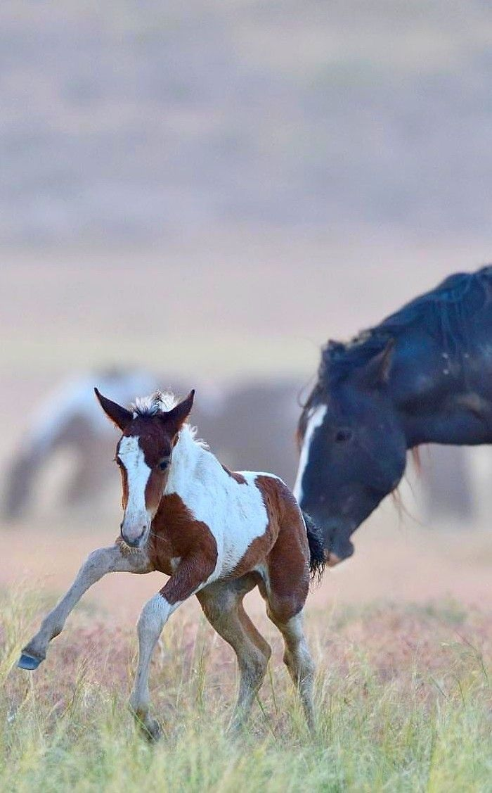 A Mother S Encouragement With Images Animals Beautiful Horse Love