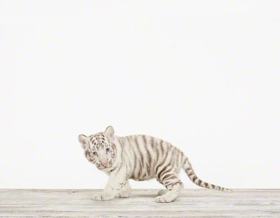 how incredibly adorable are these animal prints?!?!  Found on elementsofstyle blog