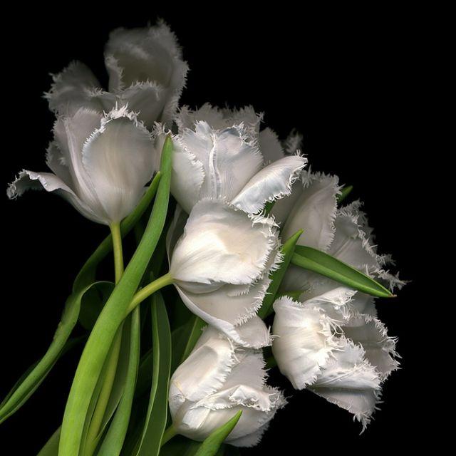 Abrigo Escarpado - Flores Vivas Ultravioleta Por Vida Vida jY61MN