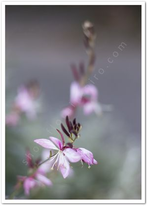 Pink Flower  - from http://shop.florainspiro.com Photography by Emelie Ekborg