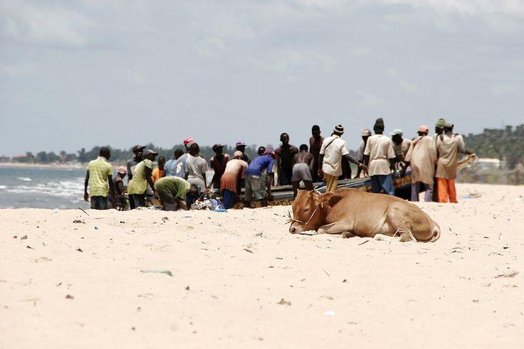 While you were sleeping.. Kololi Beach - The Gambia