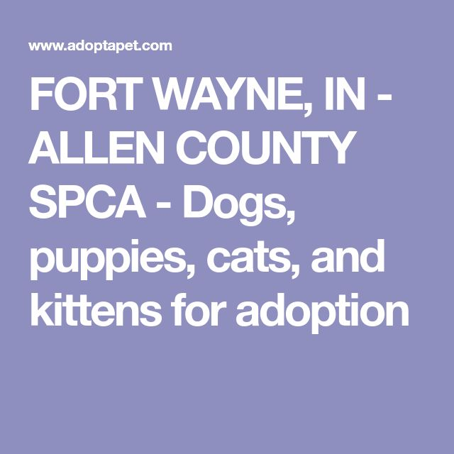 FORT WAYNE, IN  - ALLEN COUNTY SPCA -  Dogs, puppies, cats, and kittens for adoption
