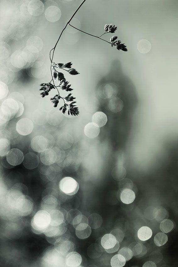 ♂ A stranger in the light by Helle Lorenzen