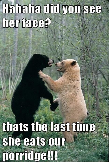 #black #white #bear #animal #mamals