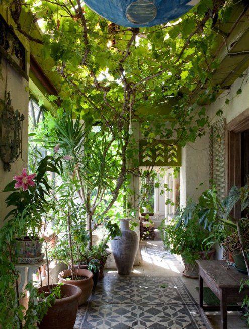 spectac indoor plants