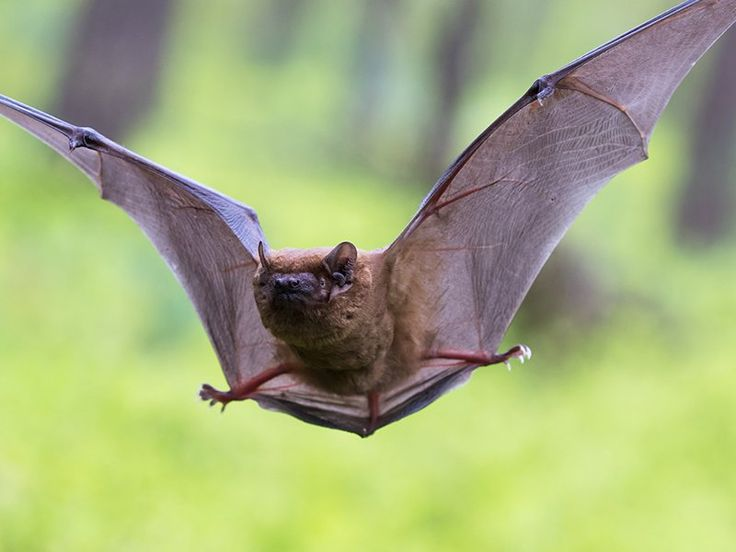 Park Art|My WordPress Blog_How To Get Bats Or Birds Out Of Chimney