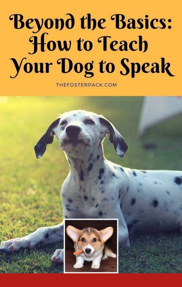 Best Dog Training Treats Amazon And Potty Training Dogs Free