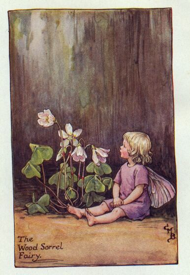 Wood Sorrel Fairy (Spring)