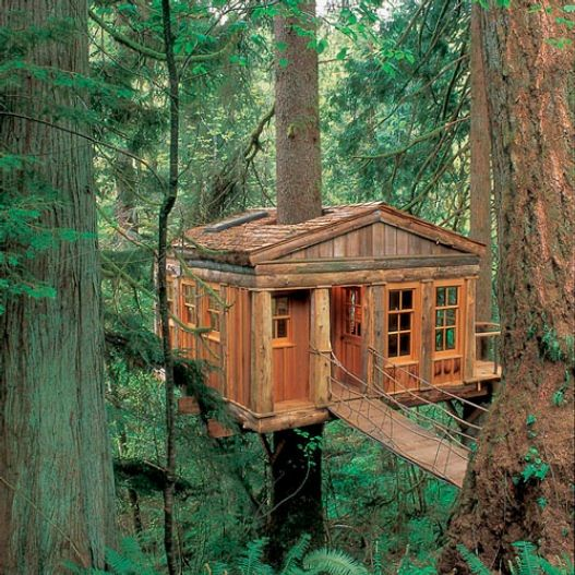 Tree HouseCabin, Favorite Places, Amazing Trees, Tree Houses, Bluemoon, Dreams House, Treehouse, Trees House, Blue Moon