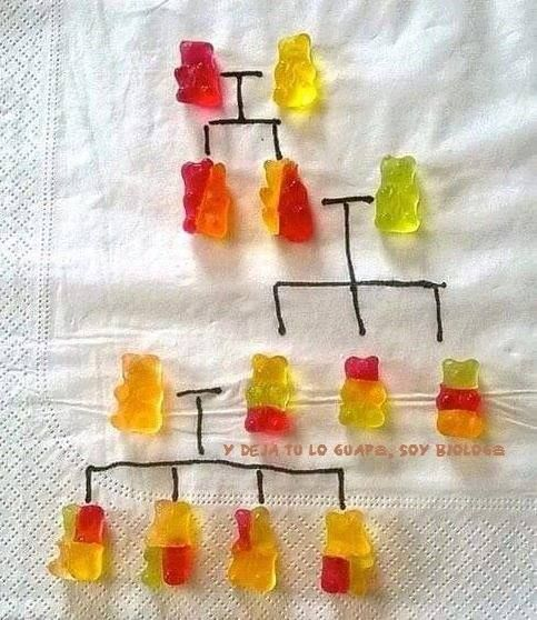Using gummy bears to teach genetics! This would be much faster than growing Mendel's sweet peas! Not to mention, super cute and fun! Will have to bookmark this so I can use it when we cover dominant and recessive genes!