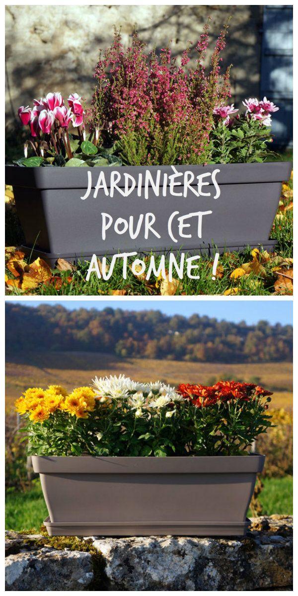 Pour une jardinière monochrome rose : chrysanthème, bruyère et cyclamen. Commencez par quelques cailloux ou billes d'argiles au fond de la jardinière pour le drainage puis ajoutez un terreau spécial jardinière. Ensuite, faites tremper les godets dans une bassine d'eau afin de défaire les mottes plus facilement. Placez au centre...