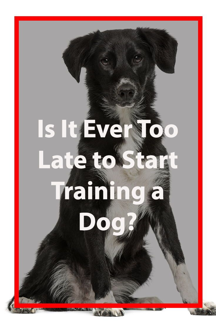 Is It Ever Too Late To Train A Dog Dog Training Dogs Training Your Dog